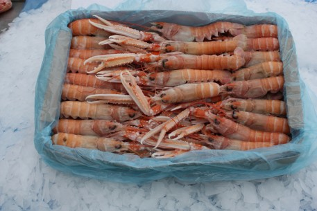 In Shore (Labedie) - Nephrops Norvegicus- Whole Prawns